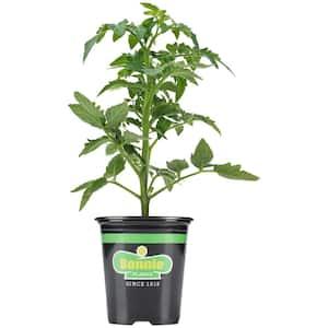 Non-GMO in Vegetable Plants