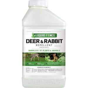 Animal & Rodent Control