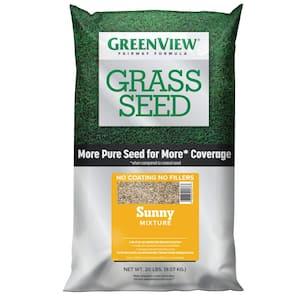 Full Sun in Grass Seed