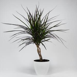 TropicalPlants.com