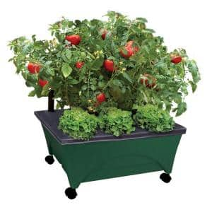 Green in Raised Garden Beds