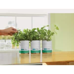 Organic Herb Plants