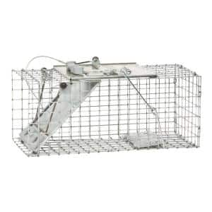 Squirrels in Animal Traps