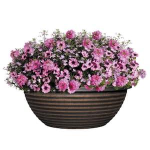 Resin in Plant Pots