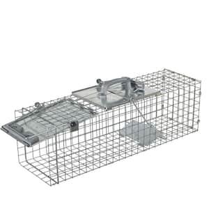 Rabbits in Animal Traps