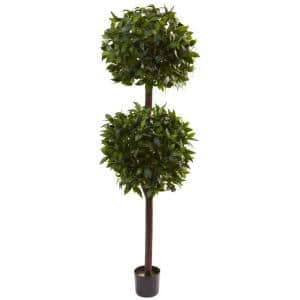 6 ft. Sweet Bay Double Ball Topiary