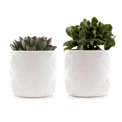 4 in. Assorted Succulent Set in White Weave Pot (2-Pack)