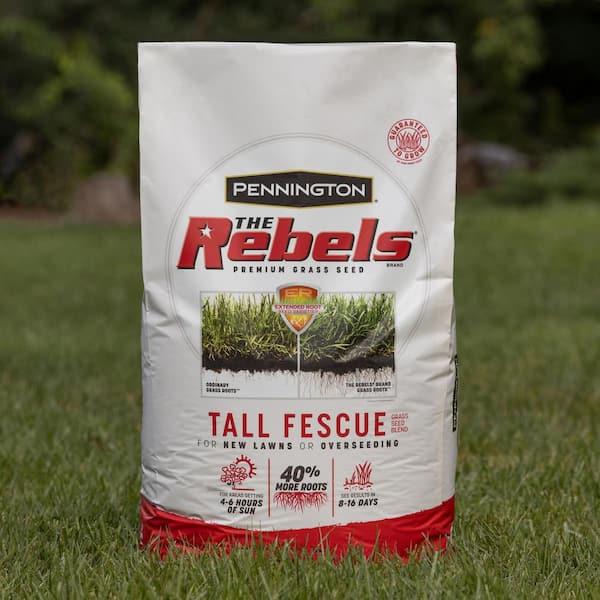 Pennington Rebel Shade Tall Fescue Mix Powder Coated Seed 3 lb.
