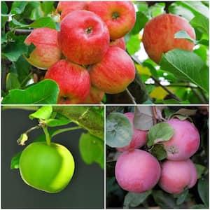 3-in-1 Apple Jubilee Tree Bare Root