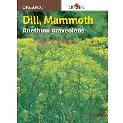 Herb Dill Mammoth Organic Seed