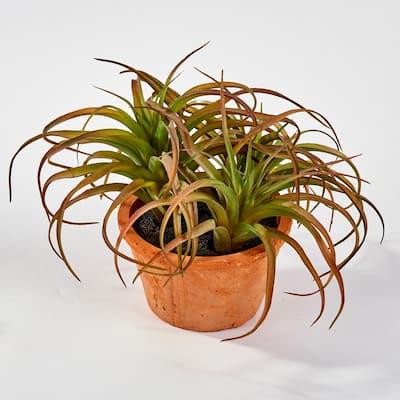 Succulent in 8 in. Pot