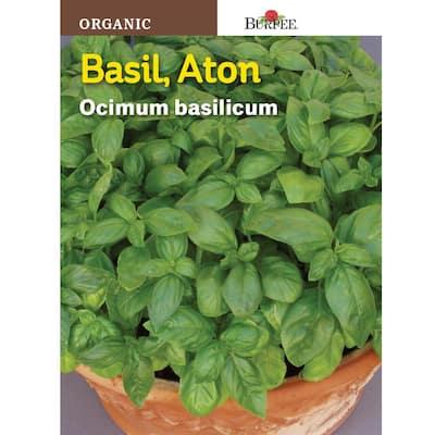 Herb Basil Aton Organic Seed
