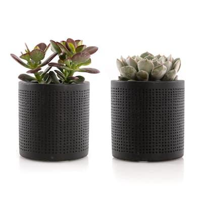 2.5 in. Assorted Succulent Set in Black Dot Pot (2-Pack)