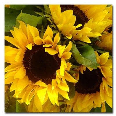 35 in. x 35 in. Sunflowers Canvas Art