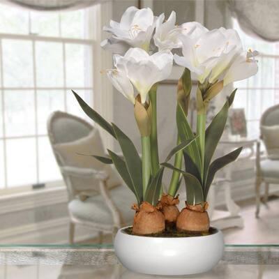 20 in. Cream Hibiscus Plant