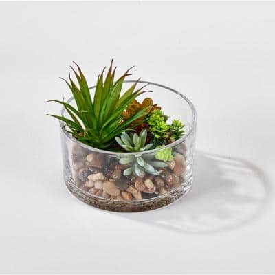 5.5 in. Dish Garden Succulents in Round Glass Container