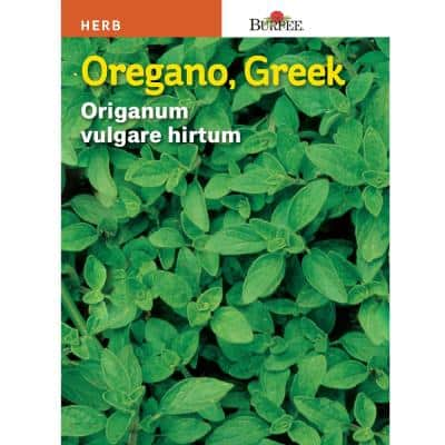Herb Oregano Seed