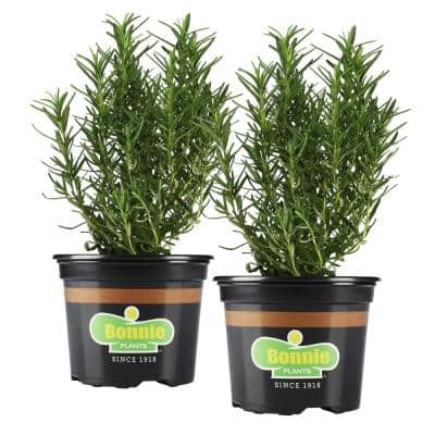 25 oz. Rosemary (2-Pack)