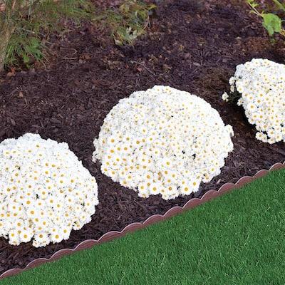 20 ft. Brown Woodgrain 2-in-1 Plastic Landscape Edging Kit