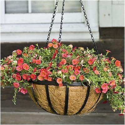 12 in. Metal English Hanging Coco Basket