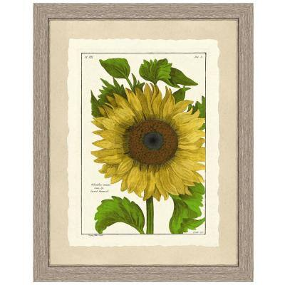 Sunflower Framed Archival Paper Wall Art (26 in. x 32 in. in full size)