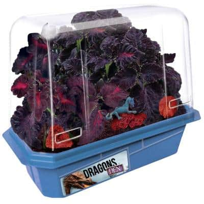Miniature Worlds Blue Dragon's Den Indoor Garden Terrarium Indoor Garden Seed Starter Kit