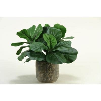 Indoor Fiddle Leaf Fig in Stone Planter