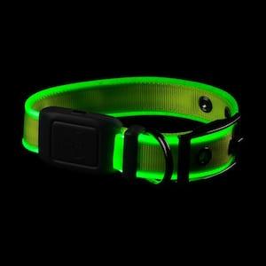 NiteDog - S - Lime/Green Rechargeable LED Collar