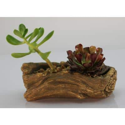7.25 in. x 4.5 in. x 2.5 in. Driftwood Ceramic Wood Plant Pot - Unique Succulent Planter Whale Log