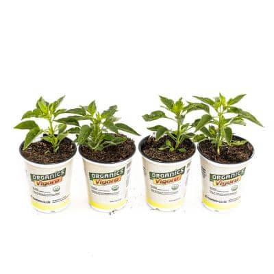 1.71-Pint Organic Serrano Pepper Plants (4-Pack)