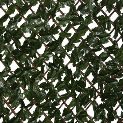 Expandable Lattice with Ivy