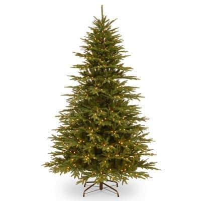 7.7 ft. Monterey Fir Tree with Clear Lights