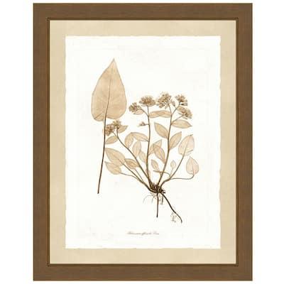 """Delicate Botany Herbarium III"" Framed Archival Paper Wall Art (20 in. x 24 in. in full size)"