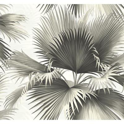 Endless Summer Black Palm Black Wallpaper Sample