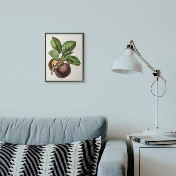 Stupell Industries 11 In X 14 In Vintage Fruit Painting By Vision Studio Framed Wall Art Ccp 393 Fr 11x14 The Home Depot