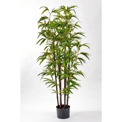 49 in. Bamboo Tree with Black Trunk in Pot