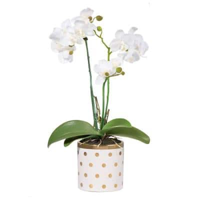 Dot Potted White/Gold Orchid
