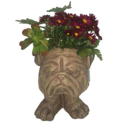 13 in. Stone Wash Bulldog Muggly Planter Statue Holds 4 in. Pot
