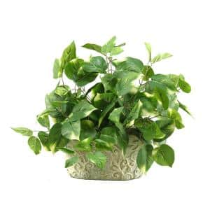 Indoor Pothos in Oblong Ceramic Planter