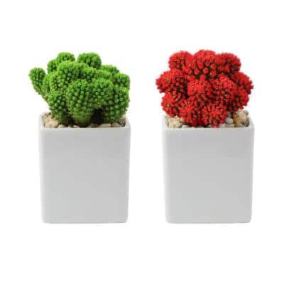 Holiday Live Desert Gems Cacti in 2.5 in. Gloss Ceramic Grower's Choice in Red or Green (2-Pack)