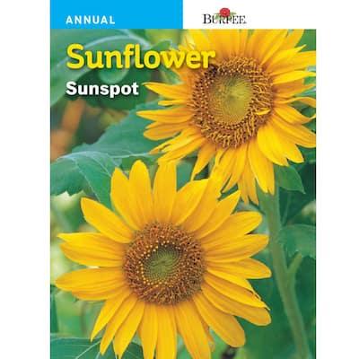 Sunflower Sunspot Seed