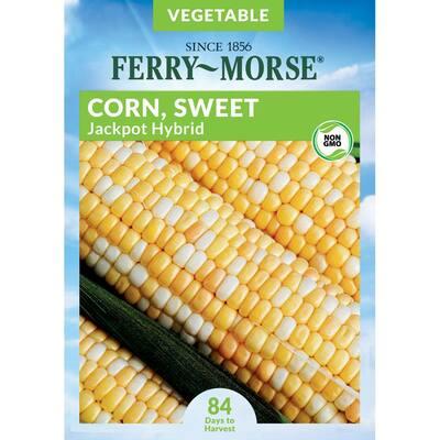 Sweet Corn Jackpot Hybrid Seed
