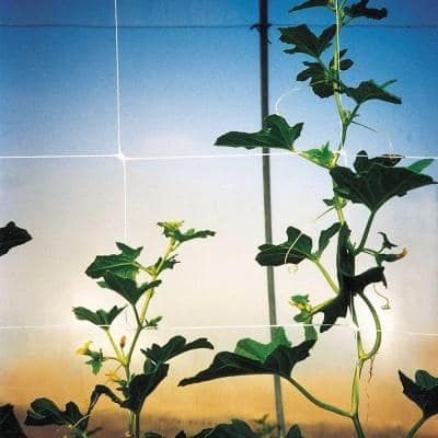 48 in. x 3280 ft. White Hortonova Plant Trellis Net