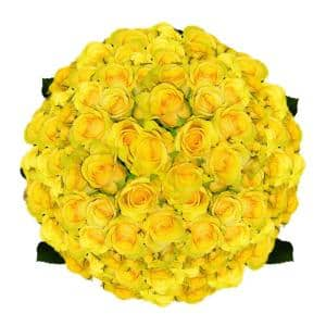 200 Stems of Soft Yellow Idole Roses- Fresh Flower Delivery