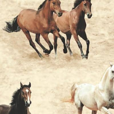 Stone Galloping Horses Wallpaper