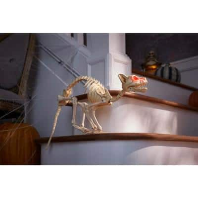 24 in. Grave and Bones Animated LED Skeleton Cat