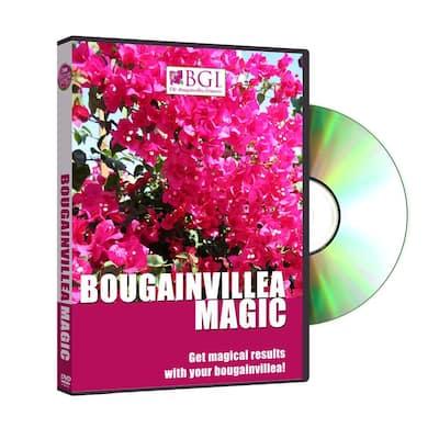 Bougainvillea Magic DVD