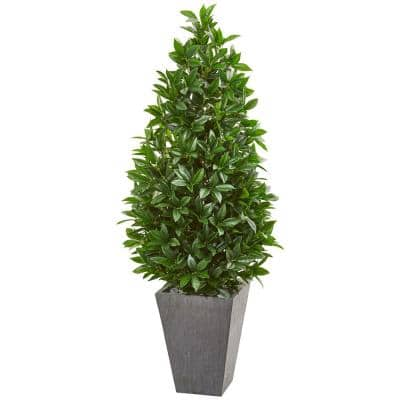 Indoor/Outdoor 57-In. Bay Leaf Cone Topiary Tree in Slate Planter