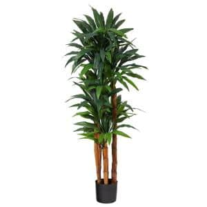 5.5ft. Dracaena Artificial Tree with Natural Cane Trunk
