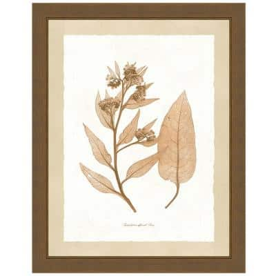 """Delicate Botany Herbarium I"" Framed Archival Paper Wall Art (26 in. x 32 in. in full size)"